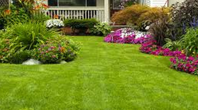 tree and landscaping menifee murrieta